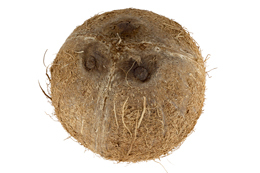 Natural ingredients coconut