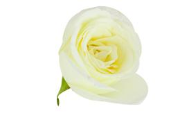 Natural ingredients rose hip oil