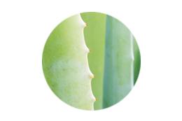 Natural ingredients Aloe Barbadensis